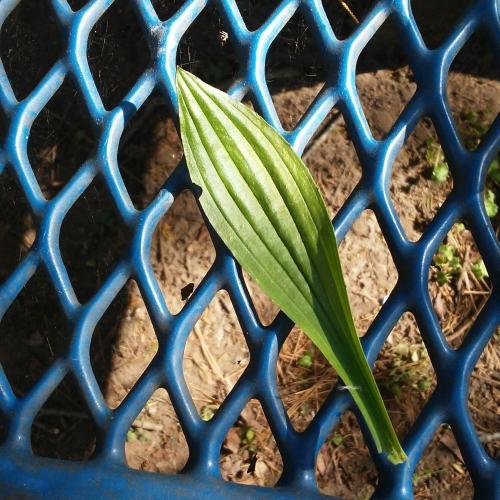 Plant surprise.jpg